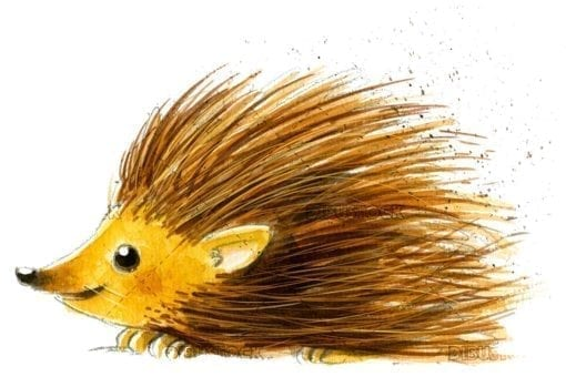 Hedgehog with white background painted in watercolor