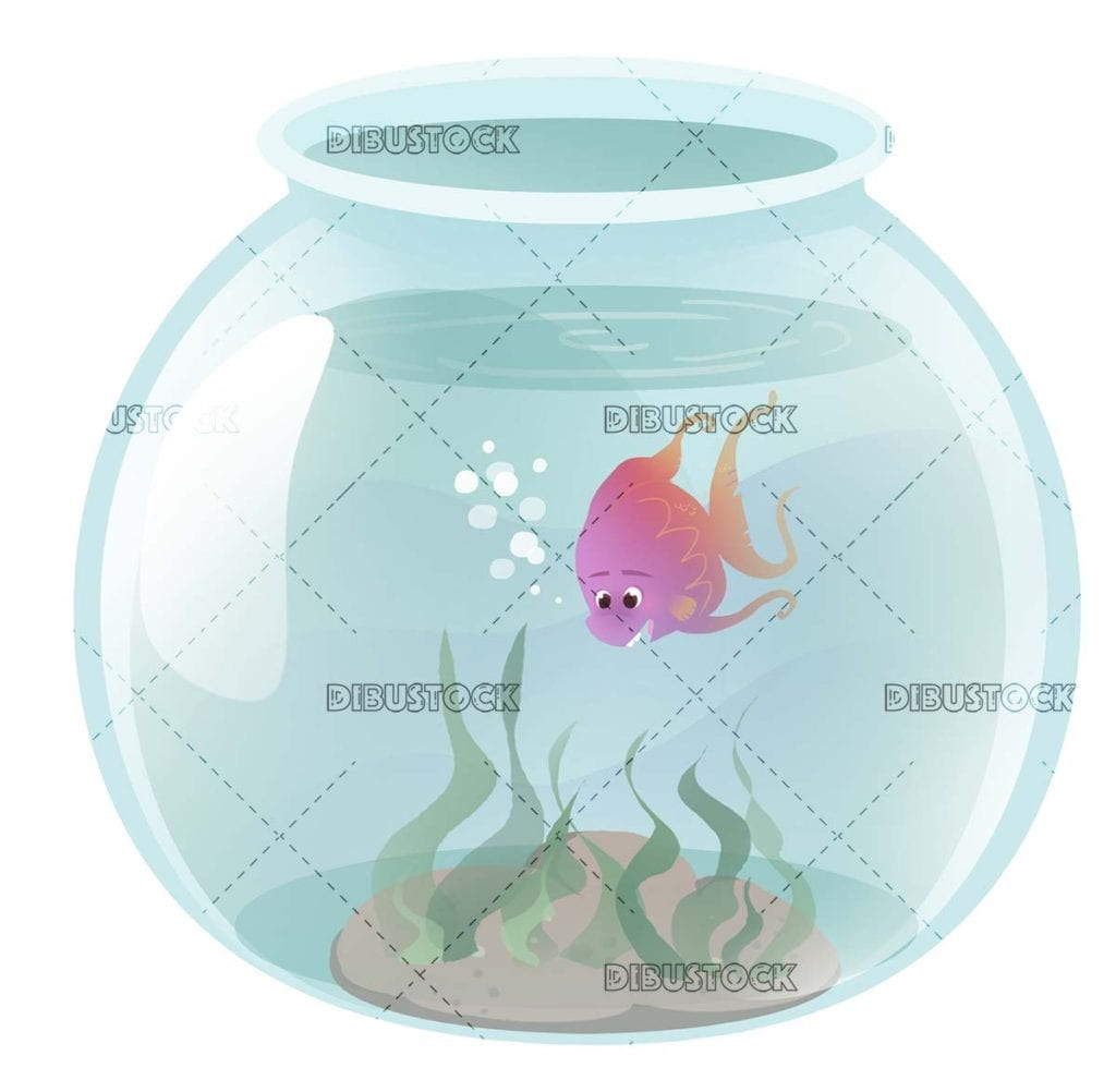 fish swimming in the fishbowl