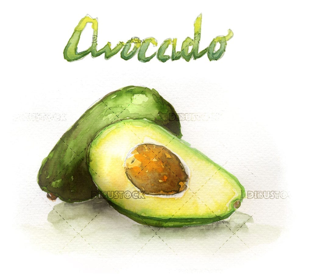 Watercolor illustration of avocado fruit