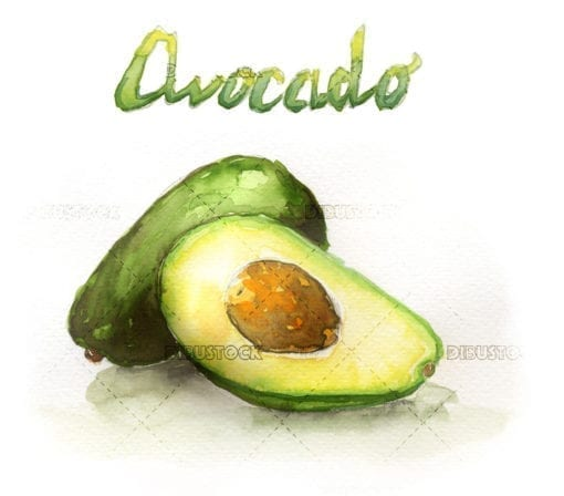 Watercolor illustration of avocado fruit
