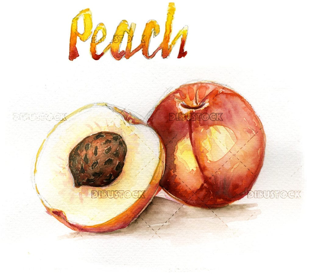 Watercolor illustration of peach fruit