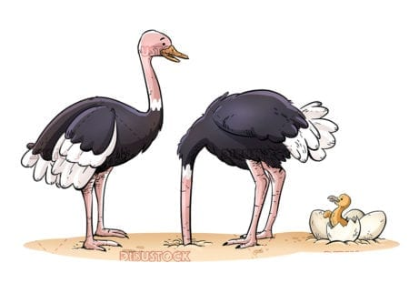 Funny family of ostriches isolated