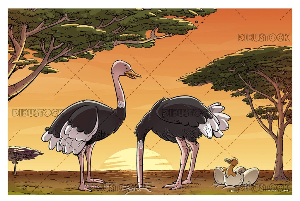 Ostrich family in the african savanna