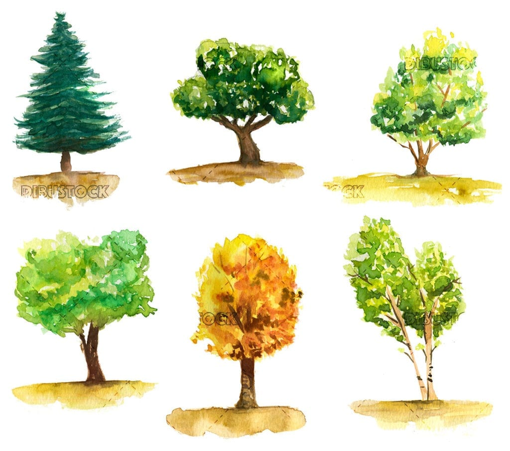 Trees of different shapes and colors