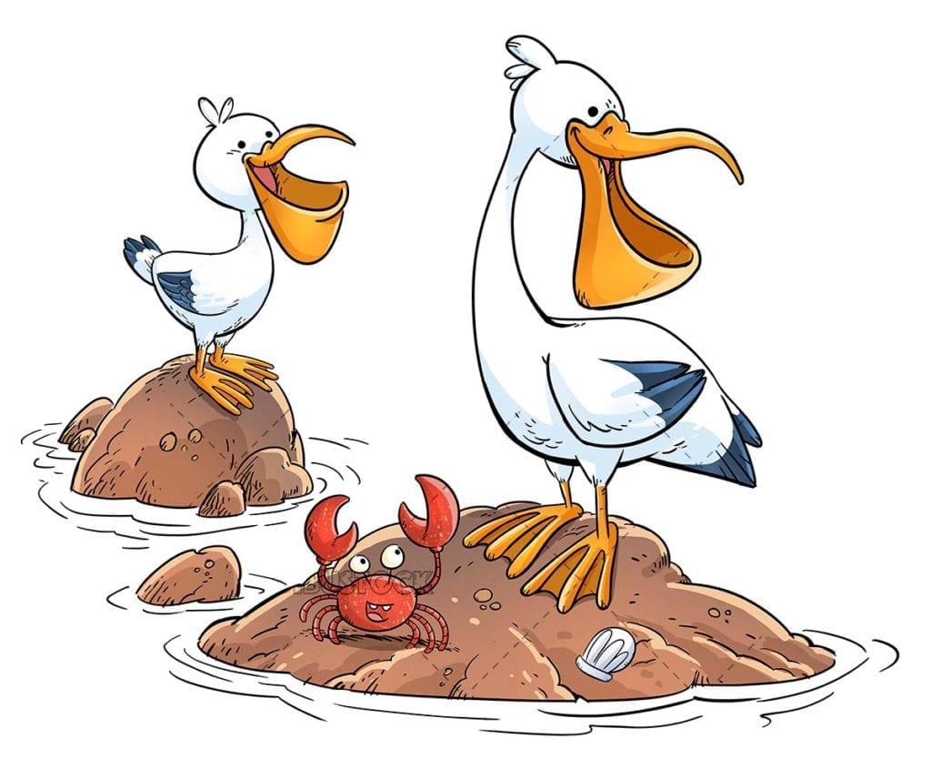 Happy pelicans on a rock